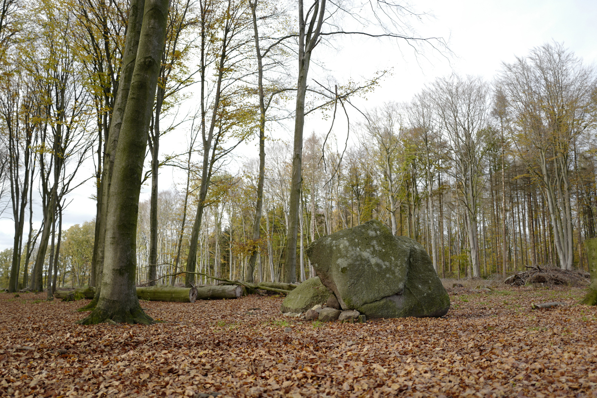 Megalith am Belmer Gattberg Foto: Kerstin Hehmann